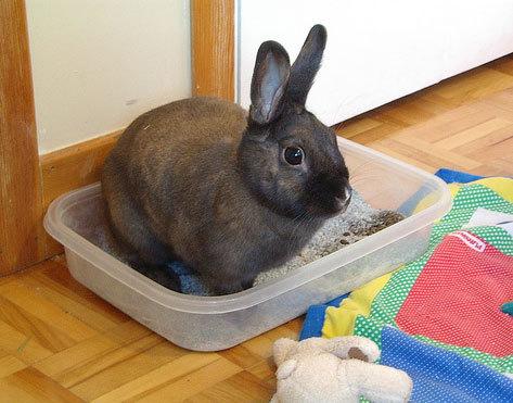 Come educare il coniglio a fare i bisogni nella lettiera - Lettiera coniglio nano ...