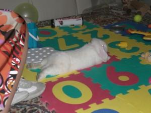 setting domestico per conigli - casa a prova di coniglio