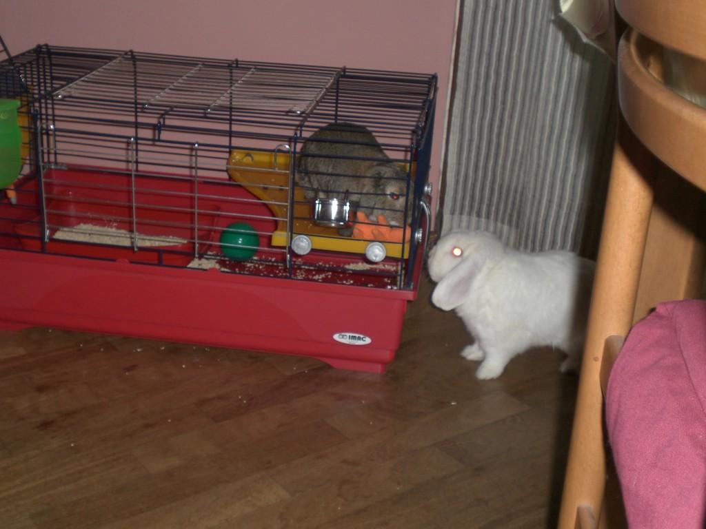 Prove inserimento sociale conigli