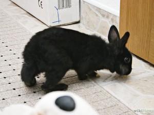 Coniglio che esplora il territorio per farlo suo
