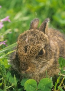 coniglio che mangia erba