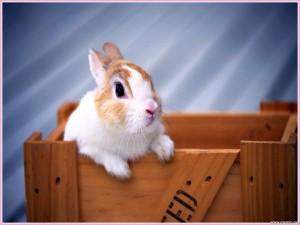 coniglio sbuca da una scatola