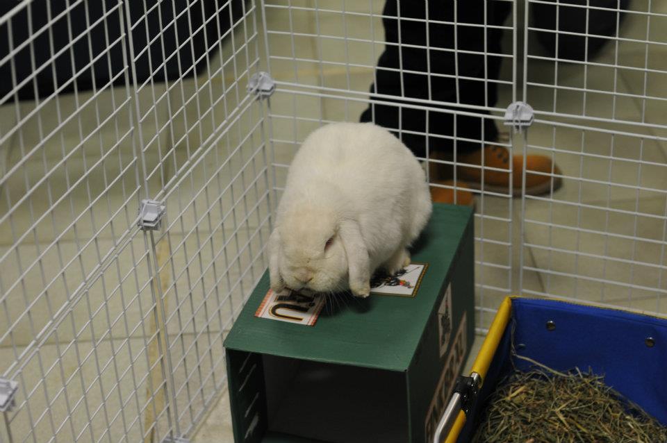 Addestrare educare un coniglio la dimensione pedagogica for Casette per conigli fai da te