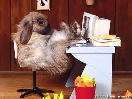 Coniglio al PC