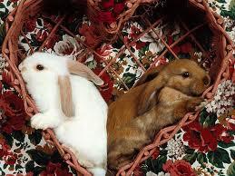 conigli San Valentino