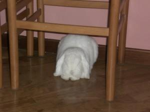 coniglio che sonnecchia