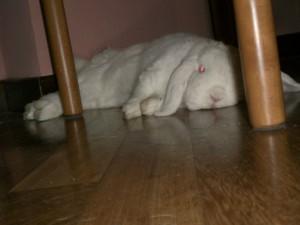 coniglio accaldato