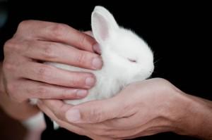 Coniglio: una scelta consapevole