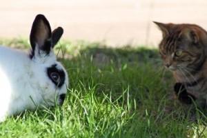 gatto e coniglio in giardino