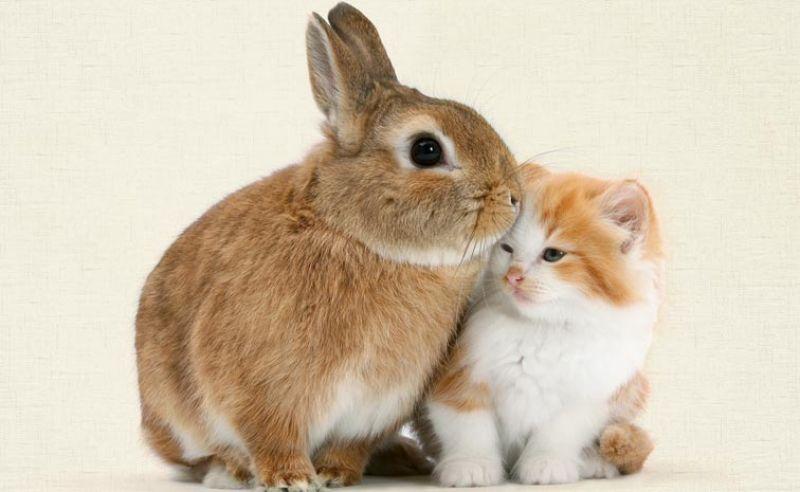 convivenza gatto e coniglio