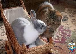 gatto che annusa coniglio