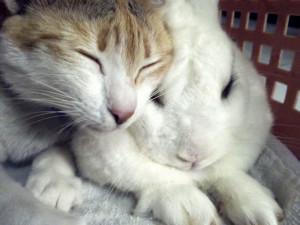 coniglio e gatto teneri insieme