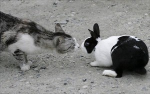 gatto e coniglio che si annusano