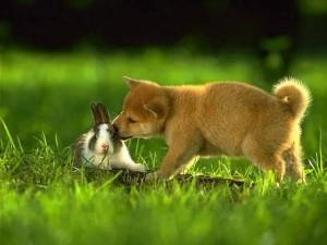 cane con coniglio
