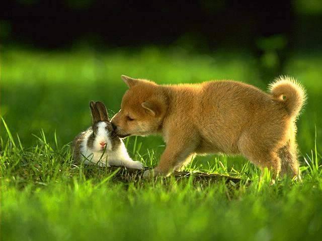 Inserimenti Convivenza Tra Conigli E Cani Addestrare Conigli