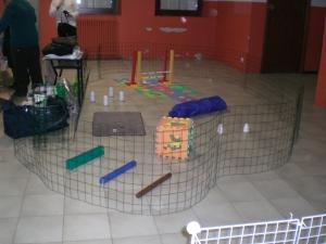 recinto con giochi per conigli