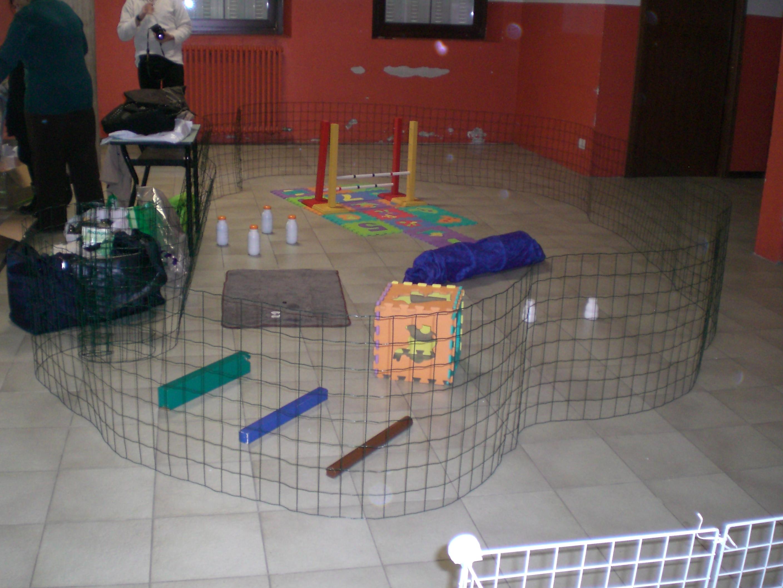 recinto con giochi per coniglio
