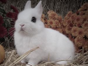 coniglietto bianco giovane