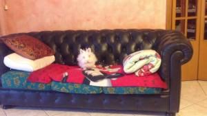 coniglio sul divano