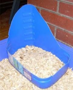 Perch il coniglio fa i bisogni fuori dalla lettiera - Lettiera coniglio nano ...