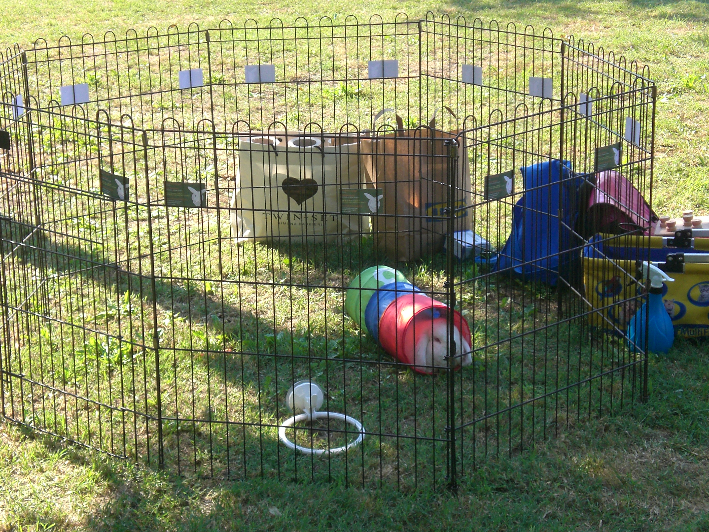 Addestrare conigli for Recinto per cani in casa fai da te