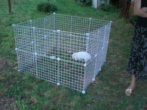 Come portare il coniglio al parco consigli per la for Recinto per cani da interno fai da te