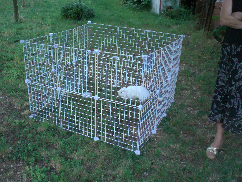 Come portare il coniglio al parco consigli per la for Recinto cani fai da te