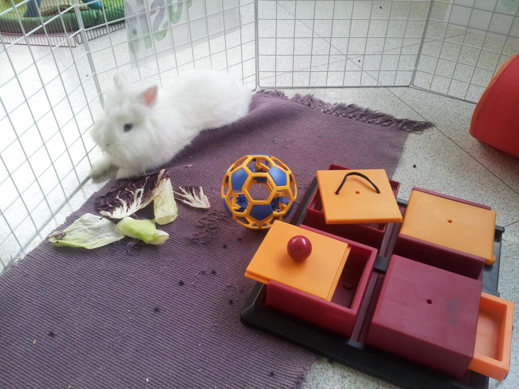giochi per conigli