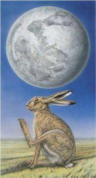 coniglio sulla luna