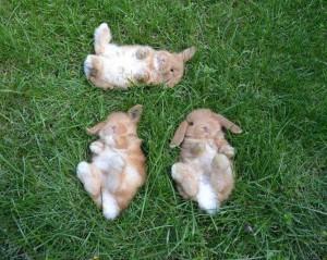 conigli rilassati a pancia in su