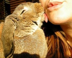 coniglio che lecca il viso alla sua umana