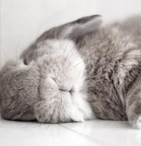 coniglio che dorme