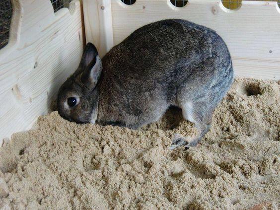 coniglio che scava