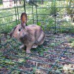 Artù alla pensione estiva di Addestrare Conigli
