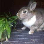 Ugo alla pensione estiva di Addestrare Conigli