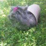 Billa che gioca alla pensione estiva di Addestrare Conigli