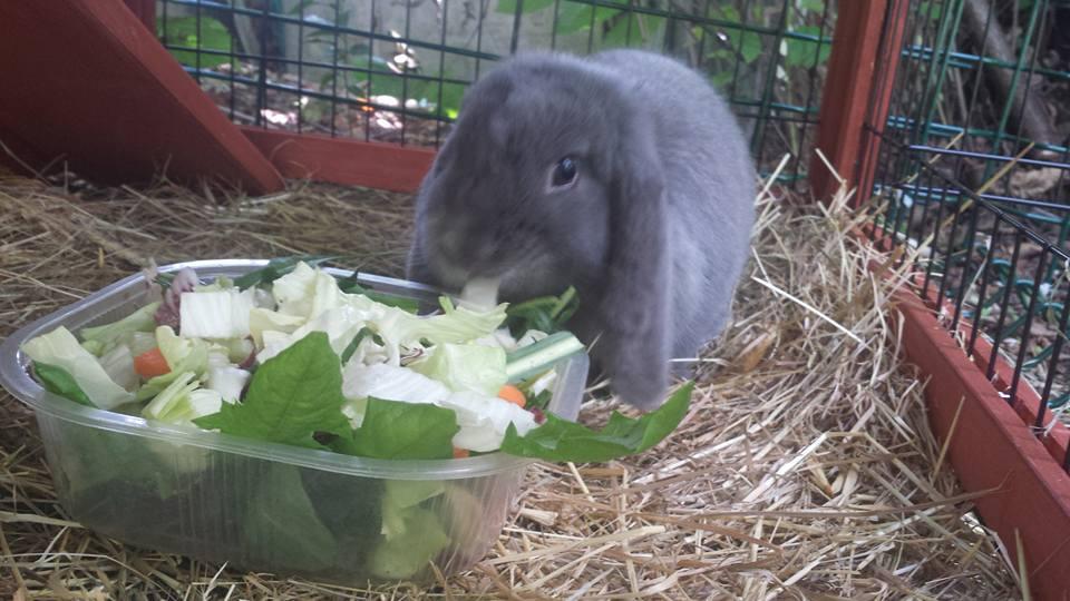 Blue che mangia alla pensione estiva di Addestrare Conigli