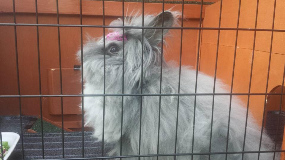 Billa coniglia nella conigliera alla pensione estiva di Addestrare Conigli