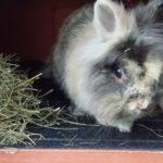 Leo alla pensione estiva di Addestrare Conigli