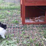 Samba e Bayleis alla pensione estiva di Addestrare Conigli