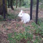 Ice coniglio alla pensione estiva di Addestrare Conigli