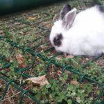 Donatella coniglia alla pensione estiva di Addestrare Conigli