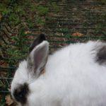 Donatella Donnie Darko coniglia alla pensione estiva di Addestrare Conigli