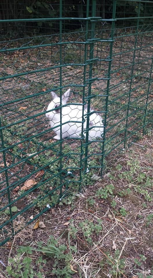 Donnie coniglia alla pensione estiva di Addestrare Conigli