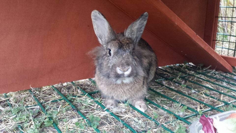 Laila coniglia alla pensione estiva di Addestrare Conigli