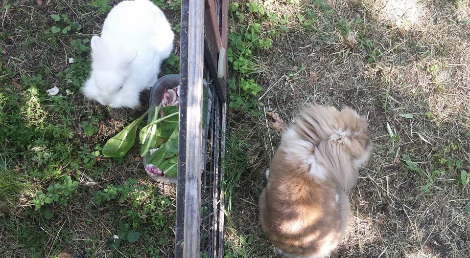 Ice e Pepe alla pensione estiva di Addestrare Conigli