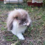 Pepe in libertà alla pensione estiva per conigli di Addestrare Conigli