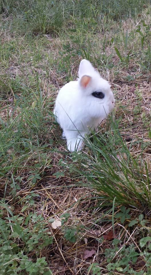 Ice in libertà alla pensione estiva per conigli di Addestrare Conigli