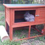 Billa alla pensione estiva di Addestrare Conigli