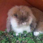 Pepe appena arrivato alla pensione estiva per conigli di Addestrare Conigli